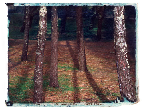 Through the Pines - Ofir, Portugal