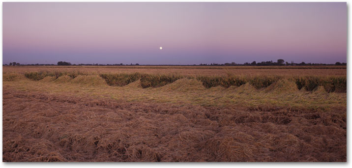 From Season of Rice - October Harvest, California