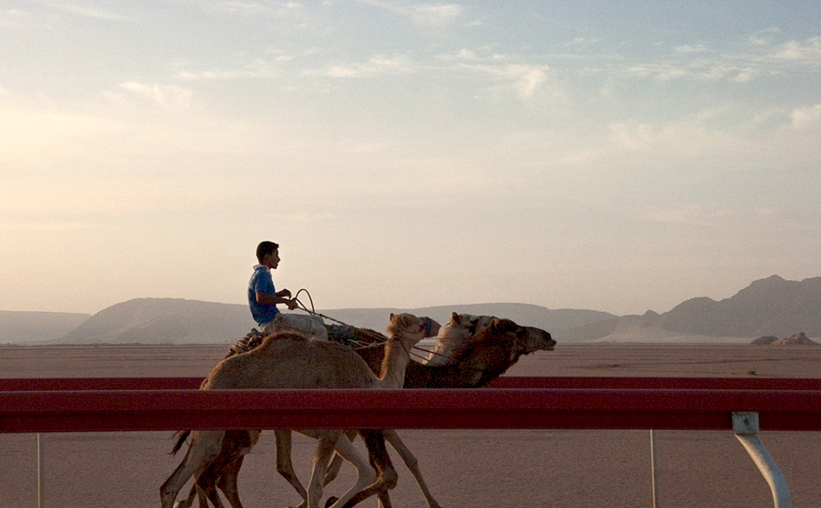 Camel Race Track, Early morning training